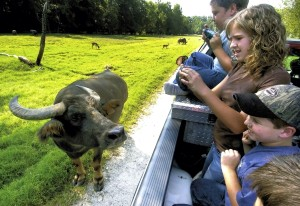 In a 2006 file photo, siblings Riley, 9, (bottom), Emily, 14, and Bradley Walker, 12, of Winston-Salem get up close and personal with a swamp water buffalo at the Lazy 5 Ranch. The Rowan ranch came in second in state field-trip attendance in 2015-16 after being first for five years.
