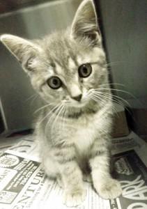 0628NE PALS-cat