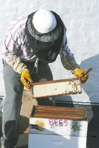 Ted Goins pulls one of the racks from his hive. Susan Shinn/For the Salisbury Post