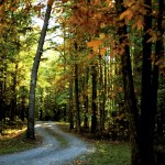 A winding gravel driveway in eastern Rowan County is ringed by the yellowish rusty leaves of the many trees.  Jon C. Lakey/Salisbury Post