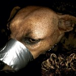 A woman was sentenced to probation Thursday for taping her dog's mouth shut and posting photos on Facebook. Submitted photo
