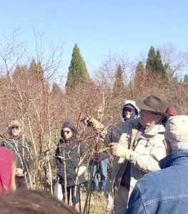 Cooperative Extension Bill Cline shows how to prune mature blueberries at Pine Top Blueberry Farm.