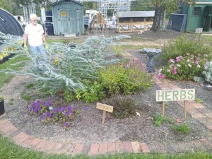Extension Master Gardener Sally Bradley looks over the herb garden at the Extension office. An herb class will be held July 30.
