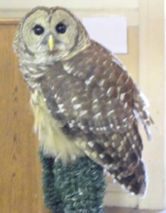 Cooperative Extension You might get to meet an owl at a Cooperative Extension day camp.