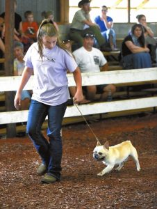 Tiffin Jacobs with George a French Bulldog. He was selected as Best In the Show in the 4-H Dog Show at the Rowan County Fair.   photo by Wayne  Hinshaw, for the Salisbury Post