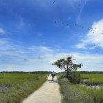 The half-mile walk across the salt marsh to the beach gives visitors a chance to see the small sea creatures in the mud as pelicans fly overhead. Wayne Hinshaw/For the Salisbury Post