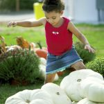 Sariah Logan tries to find the perfect white pumpkin for her family's fall decorations. Jon C. Lakey/Salisbury Post