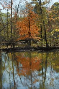 Bright leaves on the trees along the creek at Providence Church Road and Goodman Lake Road are reflected in the water, like a mirror.  Photo by Wayne Hinshaw, for the Salisbury Post