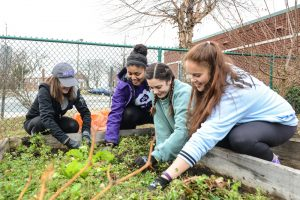 From left to right, High Point University students Meghan Burr, Jasmyn Alexander, Nora Bauso and Jordyn Freburger work in the community garden at the Macedonia Family Resource Center. Submitted photo.