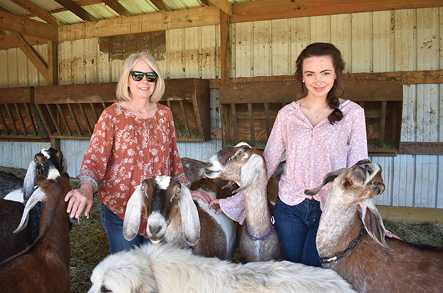 salisburypost.com - Down Goat: Local farm and creamery poised to add goat yoga, artisan goat cheese to offerings